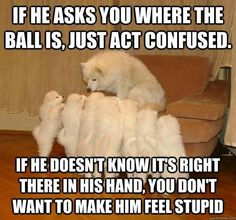 Funny Dog Pictures with Captions | Pinned by Becky Reed