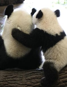 Panda hug~ Some days I wish I could have one of these, well that is if it wasn't so dangerous.