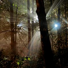 A fun image sharing community. Explore amazing art and photography and share your own visual inspiration! Natural Night Lights, Tree Images, Natural Light Photography, Tree Photography, Inspiring Photography, Wildlife Photography, Digital Photography School, Light Images, Light Beam