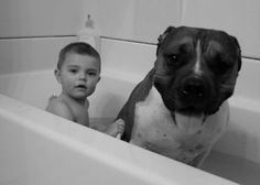 Bathtime for the Pit Bull (and baby) :) <3 #PitBull #Baby