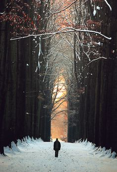 Snow in Sonian Forest, Brussels, Belgium
