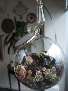 succulents+crystals