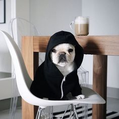 A poem for mornings: Coffee Coffee Coffee. Everybody shut up. by piggyandpolly Funny Dogs, Cute Dogs, Puppy Breath, Dog Coffee, Cute Baby Animals, Dog Life, Dogs And Puppies, Dog Cat, Coffee Addiction