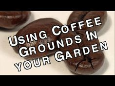 Used Coffee Grounds How to Use Them to Enhance and Fertilize Your Garden Soil for FREE Organic Soil, Organic Gardening, Urban Gardening, Gardening For Beginners, Gardening Tips, Uses For Coffee Grounds, Worm Farm, Hobby Farms, Garden Pests