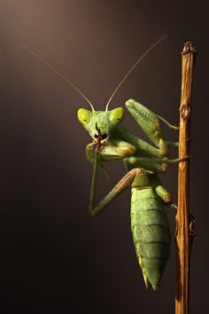 Praying Mantis.  Shhhhhh......