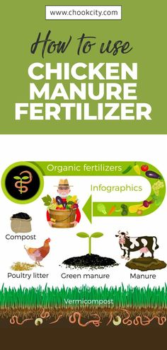You can use chicken manure fertilizer in three ways:.. Let's find out how.. . . . #ChookCity #Chicken #RaiseChickens #BackyardChickens #UrbanGarden #UrbanHomestead #Homestead #Gardening #ChickenLove #Chickenlife #FarmLife #Chickens #Womenwhofarm #Farming #ChickenManureFertilizer Chicken Facts, Chicken Life, Home Grown Vegetables, Growing Vegetables, Gardening For Beginners, Gardening Tips, Where To Buy Chickens, Chicken Breeds For Eggs, How To Grow Taller