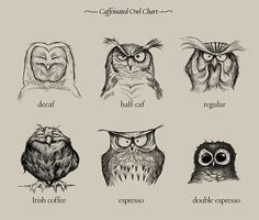 The Effects Of Coffee, As Explained By Owls