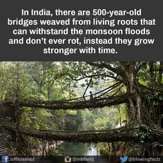 500 Year Old Bridges fail is funny, another cool image. From the site of the cool pictures check back for more cool posts Oh The Places You'll Go, Cool Places To Visit, Places To Travel, Travel Destinations, Old Bridges, To Infinity And Beyond, The More You Know, Adventure Is Out There, Fun Facts