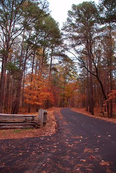 Jeff Busby Park - Natchez Trace Parkway -Mississippi -- this is why fall is my fav time of year. Gatlinburg Tennessee, Tennessee Cabins, Tennessee Vacation, Natchez Trace, Adventure Is Out There, Vacation Spots, Mississippi, Places To See, Natural Beauty
