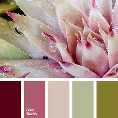 Color Palette #2741