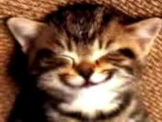 """Cute kitten singing """"Happy Birthday"""" to that special one. Like - Comment - Subscribe : )"""