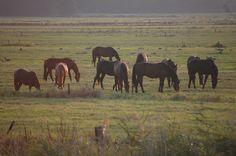 Paarden langs de oevers van De Eem