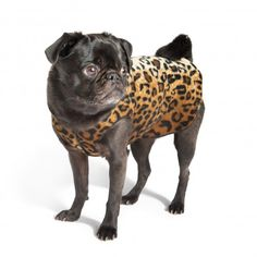 stretch fleece pullovers from gold paw series