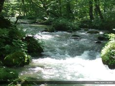 """Rapids through the forest of """"Buna"""" trees in Oirase Gorge, Japan."""