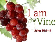 John - I am the true Vine, and My Father is the vinedresser. 2 Every branch in Me that does not bear fruit, He takes away; and every branch that conti… Readings Of The Day, Parables Of Jesus, True Vine, In The Flesh, Inside Out, My Father, Vines, Fruit, Motivational Quotes
