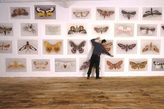Joseph Scheer adjusts moth prints on the wall of his studio at home...