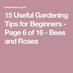 15 Useful Gardening Tips for Beginners - Page 6 of 16 - Bees and Roses