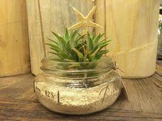 Mason Jar Terrarium with Edithae Air Plant & Starfish
