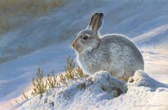 L'Assommoir Mountain Hare by Andrew Hutchinson