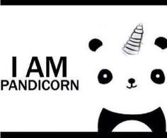 Panda + unicorn = pandicorn