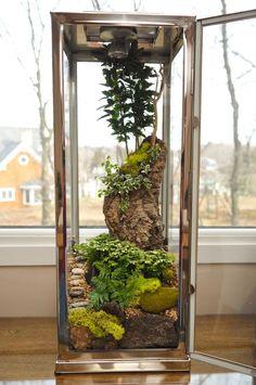 terrarium *understatement*...Wow, that's a terrarium!