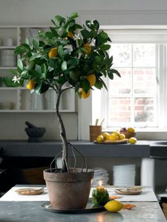 Feel a bit fruity all year round with a faux lemon tree!