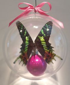 """Urania reiphus"" from Madagascar      The Sunset Moth (the most beautiful moth in the world, day flying moth, life span one week) 100 mm clear ornament $30.00 US"