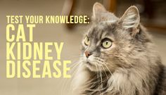 How Much Do You Know About #Cat #Kidney #Health?