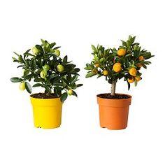plante verte ikea wish list appartement pinterest plante verte ikea plantes vertes et ikea. Black Bedroom Furniture Sets. Home Design Ideas