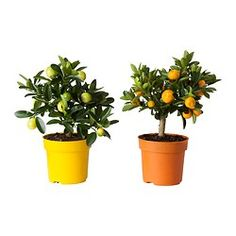 Portavasi, piante e supporti - IKEA