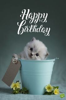 90 Happy Birthday Sister Quotes, Funny Wishes, Cake Images Collection Happy Birthday Greetings Friends, Happy Birthday Wishes Images, Happy Birthday Celebration, Best Birthday Wishes, Happy Birthday Pictures, Happy Birthday Sister, Happy Birthday Funny, Happy Birthday Quotes, Happy Birthday Cards