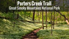 Porter's Creek trail in the Great Smoky Mountains National Park is one of family favorites. See photos and read all about one of our family hikes.