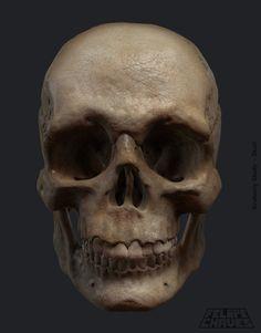 ArtStation - Anatomy Study - Skull, Felipe Chaves
