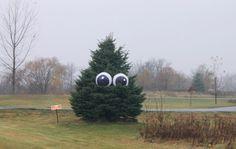 Giant Eyeballs in a Tree. Super cheap last minute Halloween idea!
