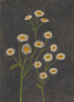 Flores 🌸🌹🌼🌻