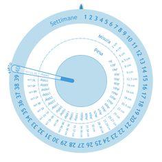 Ruota della gravidanza   Calcolatrici