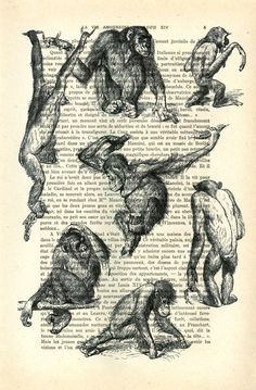 Monkeys art print monkey illustration vintage by MadameMemento