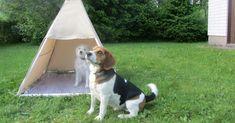 Hemmottele koiraasi rakentamalla sille mukava kesämaja, jonne on mukava sujahtaa hellettä pakoon.