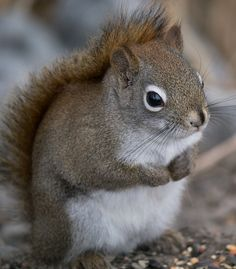 The Gifts Of Life Squirrel!!
