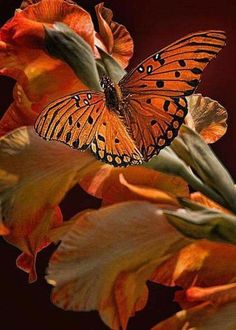 Lovely butterfly picture.