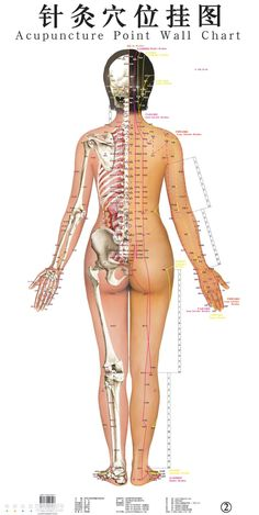 Fast Secrets # http://fastsecrets-clubs.com/alternative-medicine-what-happens-during-acupuncture-treatment/ Alternative Therapies, Alternative Health, Alternative Medicine, Acupuncture Points Chart, Holistic Medicine, Holistic Healing, Natural Medicine, Accupuncture, Traditional Chinese Medicine