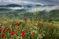 Stock Photo - dawn in a poppy field in the Valnerina near Preci, Umbria, Italy Umbria Italy, Ansel Adams, Photography Gallery, Beautiful World, Landscape Photography, Poppies, Cool Pictures, Stock Photos, Dawn
