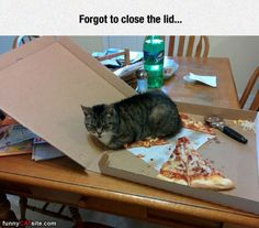 Forgot To Close The Lid - Daily Funny Cat Pictures from funnycatsite.com