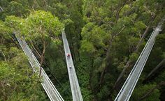 In Australia, in the middle of the rainforest, is an amazing metal structure called Illawarra Fly TreeTop Walk. It's a road and is located at an altitude of 25 meters above the ground. Places Ive Been, Places To Go, Apollo Bay, Forest Floor, Tree Tops, Victoria Australia, Travel Bugs, Go Outside, Australia Travel