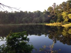 Check this out! Great place to camp. Tyler State Park in Tyler, TX.