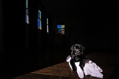 Me gusta el juego de luces y sombras, el brillo del pelo, y como el cachorro se va fundiendo con el fondo de la foto