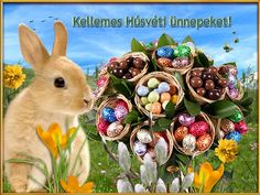 Kellemes Húsvéti ünnepeket Rabbit, Animals, Google, Facebook, Bunny, Animais, Rabbits, Animales, Animaux
