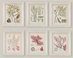 Vintage Algae Seaweeds In Green And Pink Set of 6 Botanical Prints Reproduction Size 8x10 in