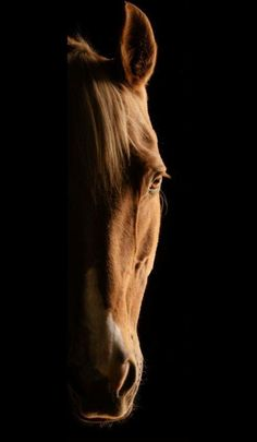 Animal Wallpaper - Hello my page Pretty Horses, Horse Love, Beautiful Horses, Animals Beautiful, Beautiful Beautiful, Horse Wallpaper, Animal Wallpaper, Horse Photos, Horse Pictures