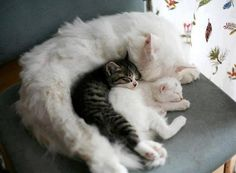 Mama cat and her kittens. Baby Cats, Baby Animals, Funny Animals, Cute Animals, Animals Images, Cute Kittens, Cats And Kittens, Cool Cats, I Love Cats